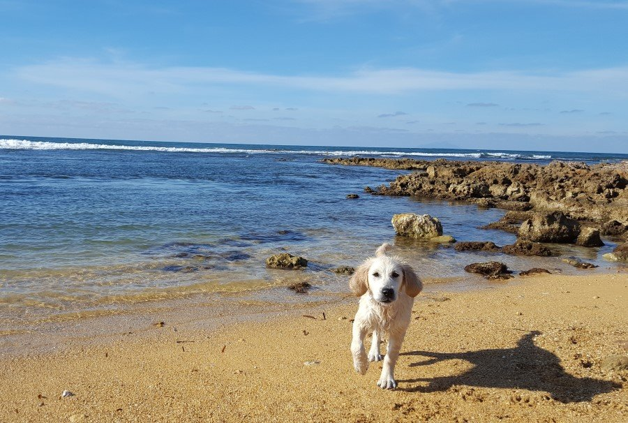 Molly al mare